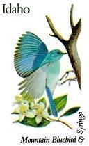 State Birds - Idaho