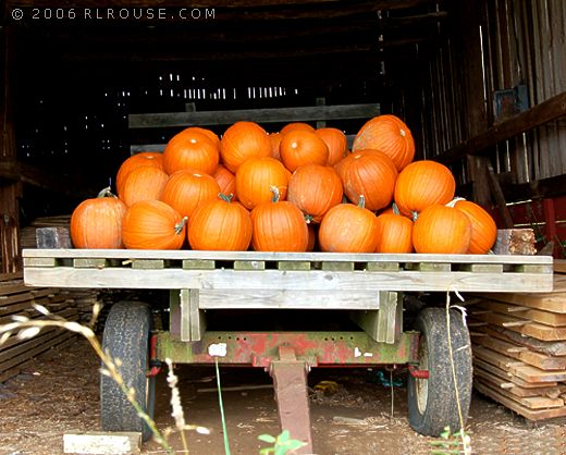 A wagon load of ripe pumpkins.